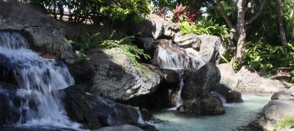 エッグドナー体験ハワイ